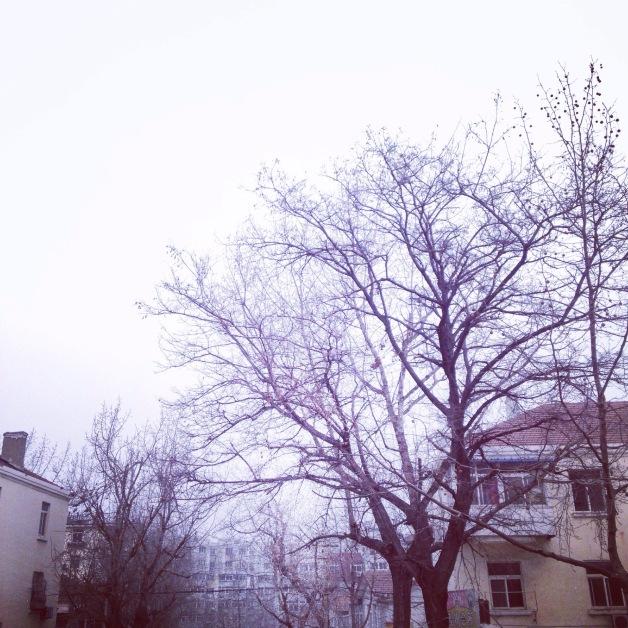 2015/01/img_7041.jpg